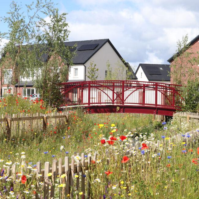 elsmore biodiversity bridge with wildflowers